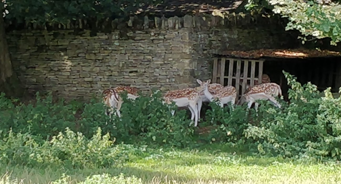Reed Business School - deer in pen to back of manor